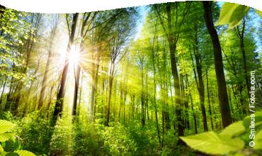 Vortrag Doktor Wald – Heilender Wald